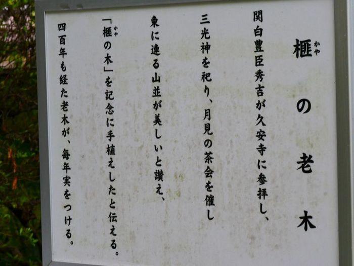 P1310759.JPG